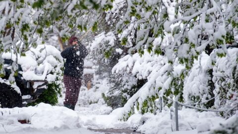 A person attempts to brush snow off the hanging tree branches after a late spring snow.